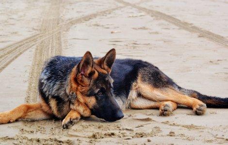 O poveste incredibilă! Un câine a supraviețuit după ce a fost...