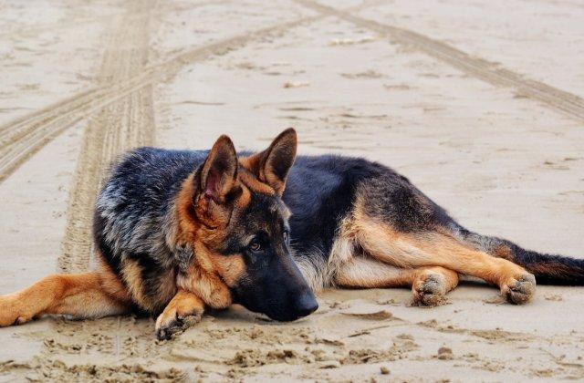 O poveste incredibilă! Un câine a supraviețuit după ce a fost îngropat în pădure