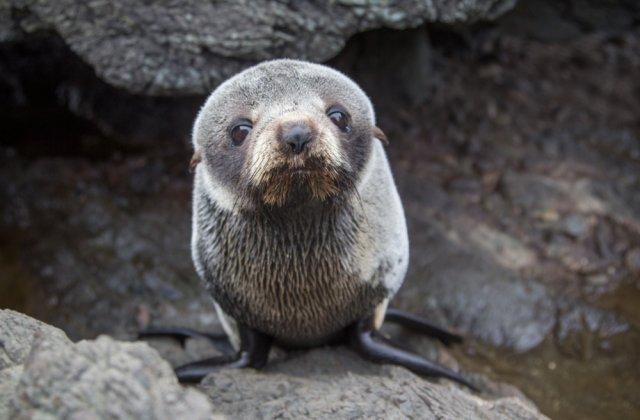 Mii de pui de focă au fost găsiți morți pe țărmul Namibiei! Ce părere au experții despre această catastrofă