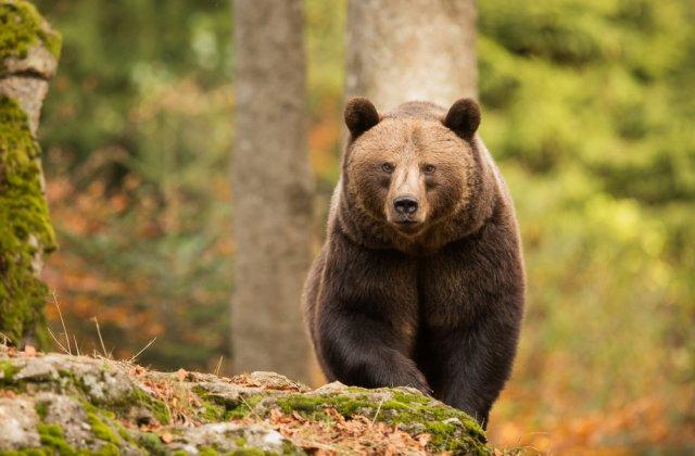 Angajatul unei grădini zoologice, ucis de urși sub privirile turiștilor