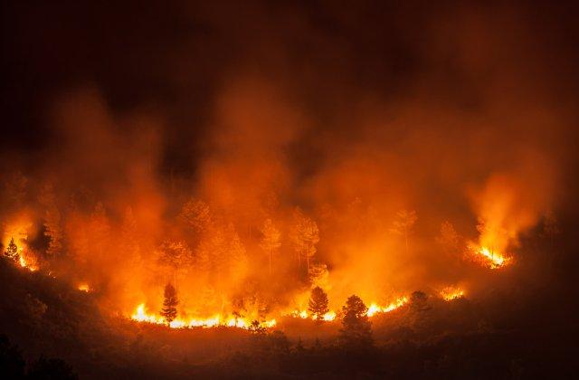 Incendiile din Indonezia au distrus, în 5 ani, peste 4,4 milioane de hectare, o suprafaţă mai mare decât cea a Danemarcei