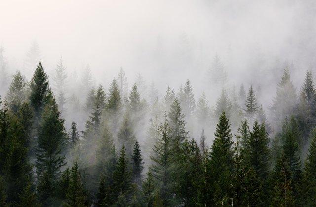 Cod GALBEN de ceață în 5 județe ale țării, luni dimineață