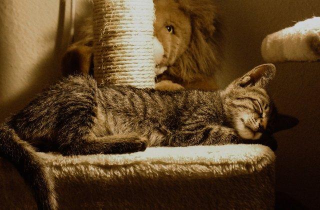 7 animale care și-au transformat somnul într-un stil de viață