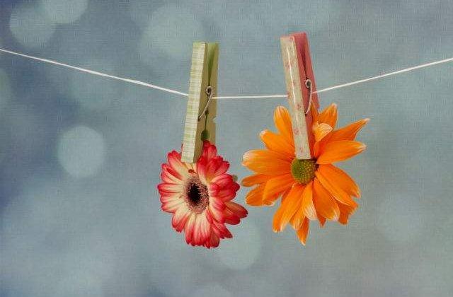 Topul florilor: 10 specii pe cat de frumoase pe atat de urat mirositoare