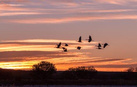 STUDIU Păsările și mamiferele migratoare trăiesc intens şi mor tinere