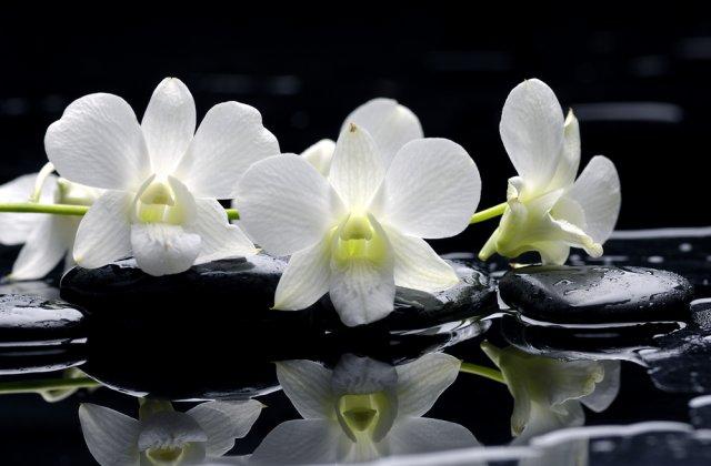 O nouă specie de orhidee a fost descoperită într-o pădure tropicală din nordul Ecuadorului