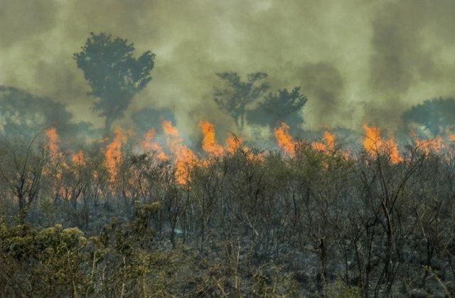 Brazilia: Incendiile forestiere au atins cel mai înalt nivel din ultimii zece ani