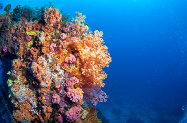 O treime dintre recifele de corali din Taiwan sunt pe cale de dispariţie