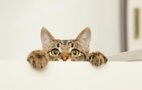 Pisică găsită după 3 ani, la 500 de metri de casa stăpânei decedate