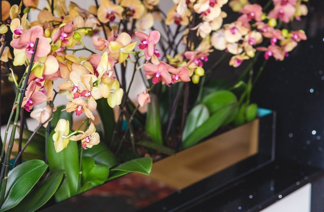 Oferă culoare casei tale cu ajutorul florilor: 3 sfaturi pentru a avea cele mai frumoase orhidee