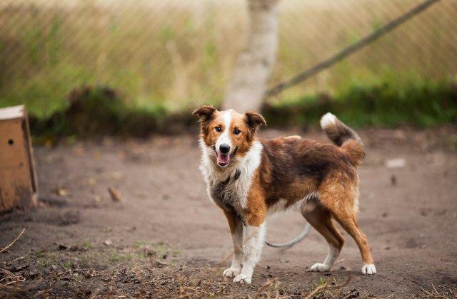 Adăpostul de câini de pe şoseaua Odăi din Sectorul 1 va fi închis