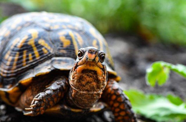 Țestoasele eșuate pe coastele din Texas sunt salvate de localnici