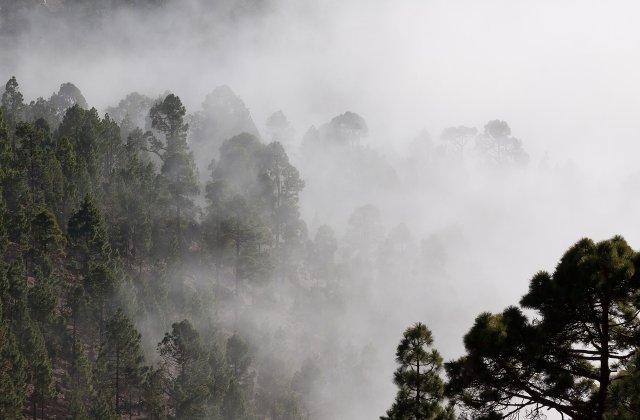 Meteo: Cod galben de ceață pentru cinci județe