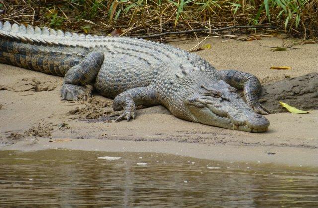 Mai mulţi crocodili în libertate, după ce au evadat de la o fermă din Africa de Sud
