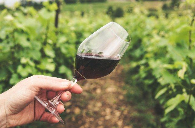 STUDIU: Vinul își poate păstra calitățile după 14 luni petrecute în spațiu
