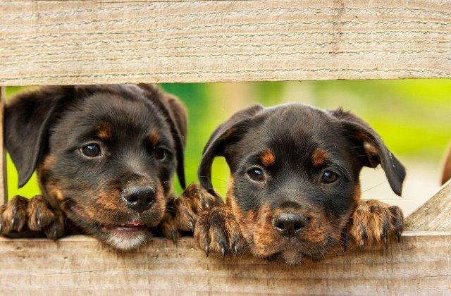 Poliţia britanică a arestat trei persoane şi a confiscat 27 de câini furaţi