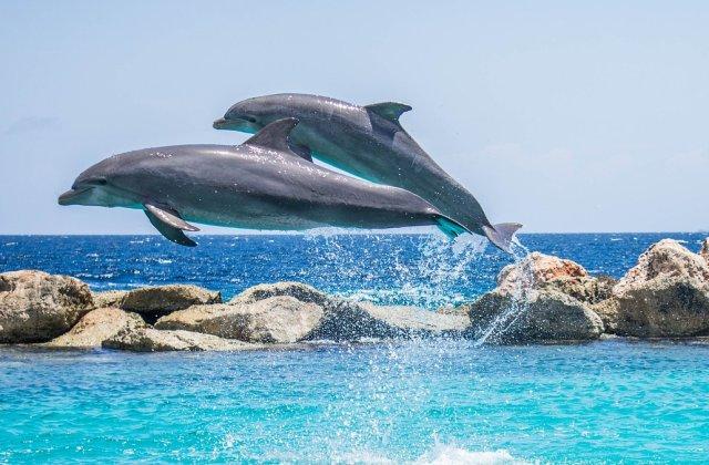 Un număr mare de pești și cel puțin 80 de delfini, găsiți morți pe o plajă din Ghana