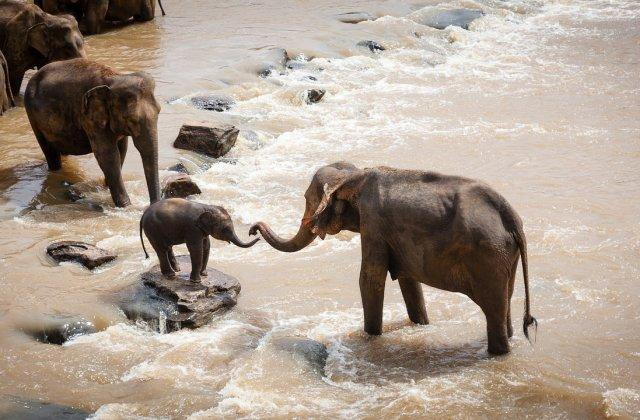 Autorităţile din Botswana au emis 287 de autorizaţii pentru vânătoarea de elefanţi