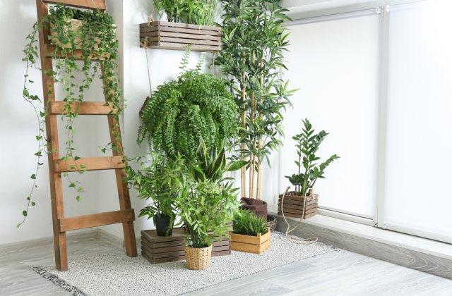Plantele, cadou unic pe timp de pandemie: 4 motive pentru care să i le oferi cuiva drag