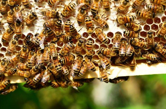 Un bărbat a murit după ce a fost înțepat de albine