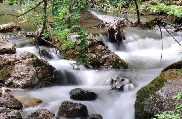 Poluare masivă cu amoniac în pârâul Bicaz. Păstrăvii din 5 bazine au murit