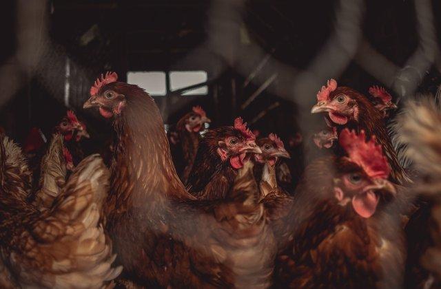Primul caz de infecție a unei persoane cu tulpina H10N3 a gripei aviare. Unde a fost depistat