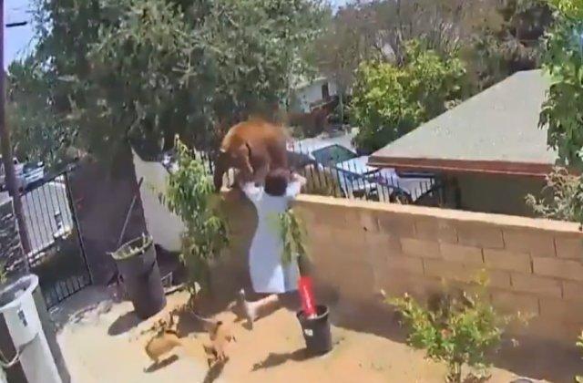 VIDEO O adolescentă s-a încăierat cu un urs pentru a-și salva câinii. Imaginile au devenit virale