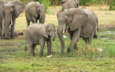 Aproape 30 de elefanți din...