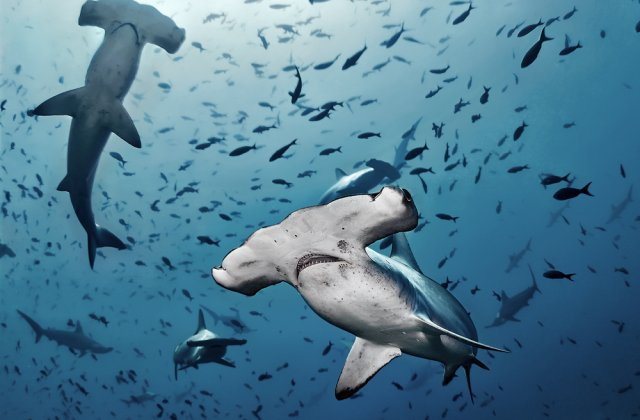 VIDEO Un grup de rechini au înconjurat persoanele aflate pe o insulă din Florida