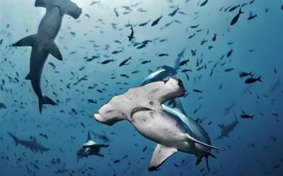 VIDEO Un grup de rechini au...