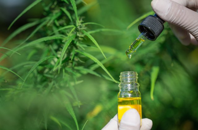 Motive pentru care uleiul de canabis este cel mai bun tratament împotriva anxietății