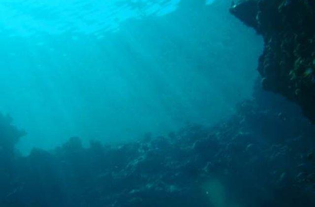 Jumatate din viata de pe Terra, ingropata sub pamant sau apa