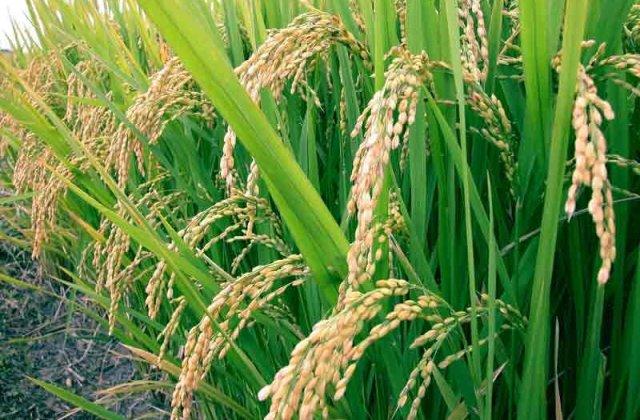 Constantin: Fermierii care au intre 5 si 30 de hectare de teren vor primi 175 euro/hectar