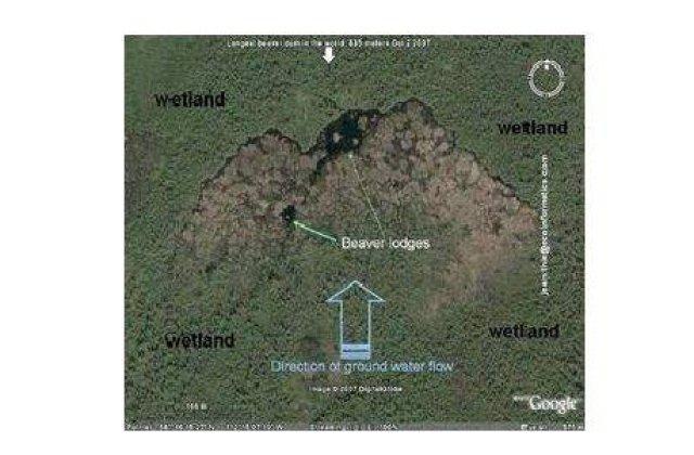Castorii au construit un baraj vizibil din spatiu