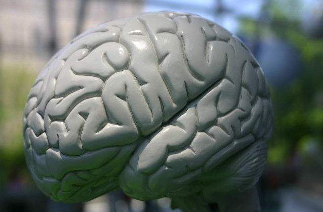 Structurile din creierele barbatilor si ale femeilor, conectate in moduri diferite