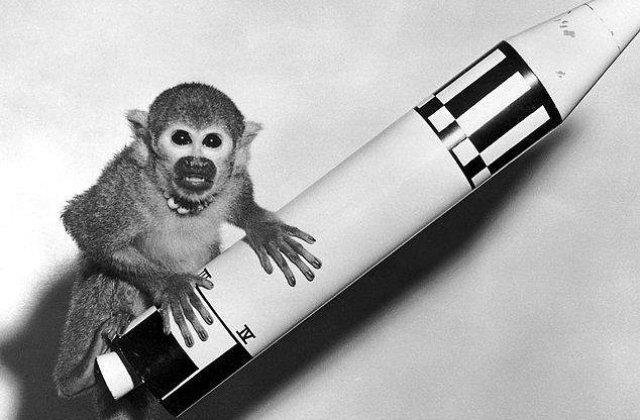 Iranul spune ca a trimis o a doua maimuta in spatiu