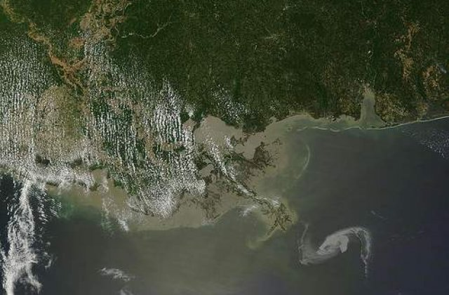 Dezastrul ecologic din Golful Mexic ia proportii