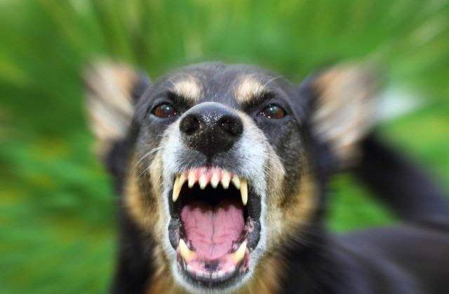 Timisoara: Tanara atacata de o haita de caini in fata Universitatii de Vest