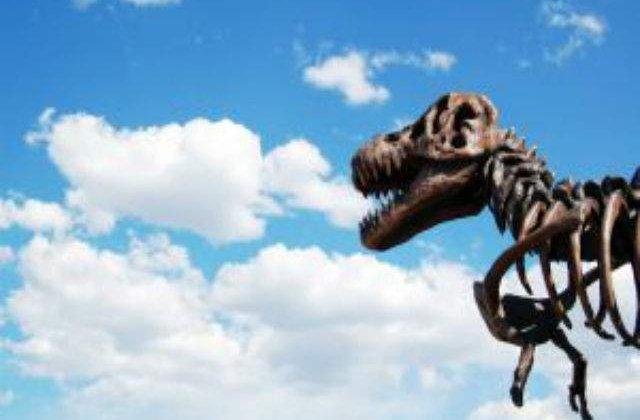 Studiu: Ploile acide au dus la disparitia dinozaurilor