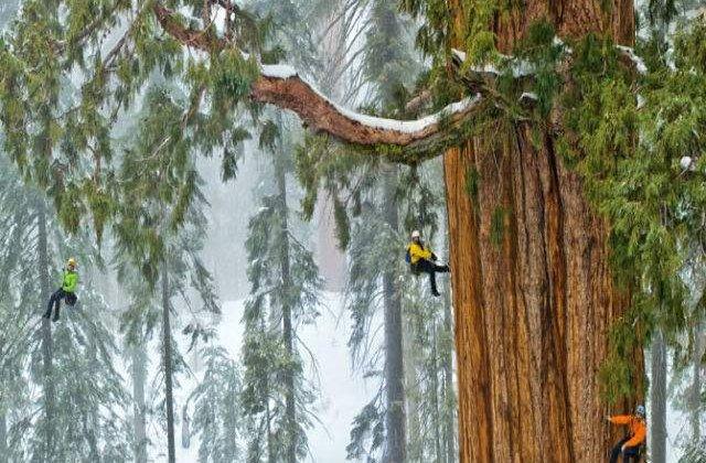 [VIDEO] Cum surprinzi intr-o singura fotografie un arbore gigant de sequoia
