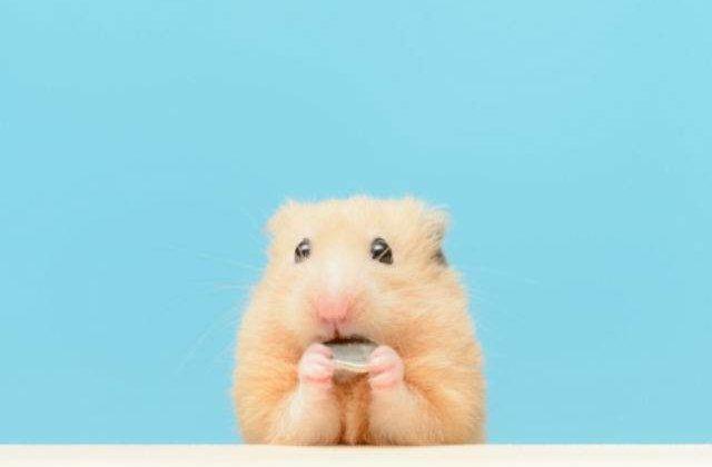 [VIDEO] Cel mai haios hamster. O sa razi cu lacrimi dupa ce vezi ce face