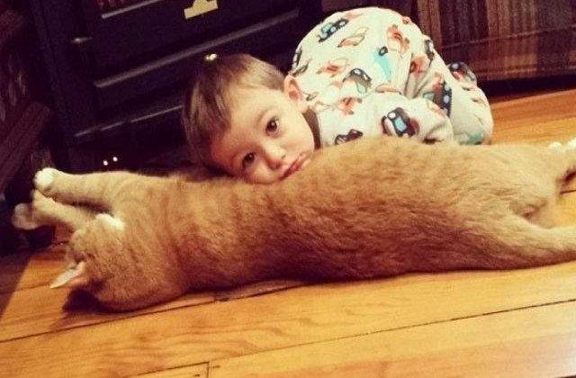[FOTO] Prietenia neasteptata dintre un baietel si o pisica. Sunt de nedespartit!
