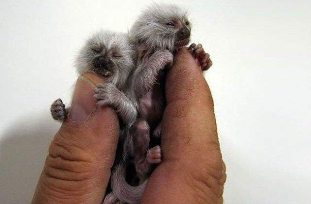 Cele mai mici animale din lume, in poze incredibile