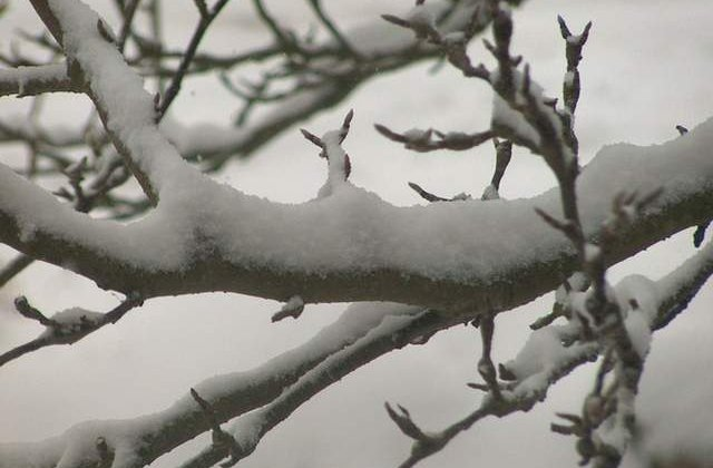 Informare meteo de ninsori si viscol. Ce zone vor fi afectate