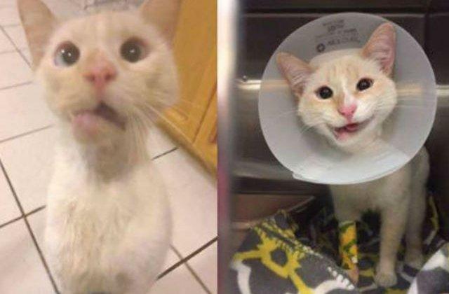 [FOTO] Nimeni nu credea ca aceasta pisica are sanse de supravietuire. Apoi s-a intamplat asta