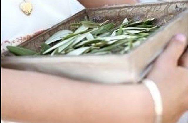 Ingredientul minune care te scapa de toate bolile! Era folosit inca de acum 3.500 de ani