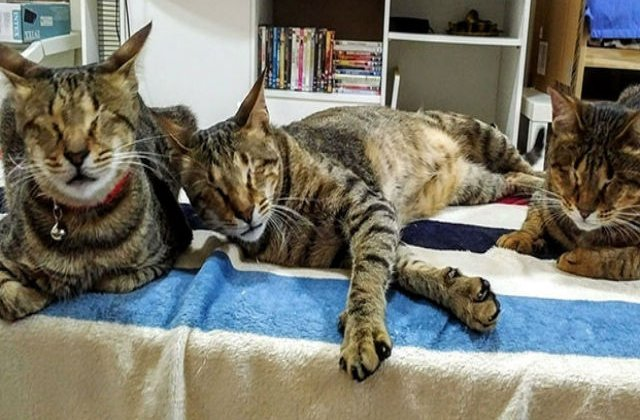[FOTO] Nimeni nu voia aceste trei pisicute oarbe. Ce s-a intamplat apoi