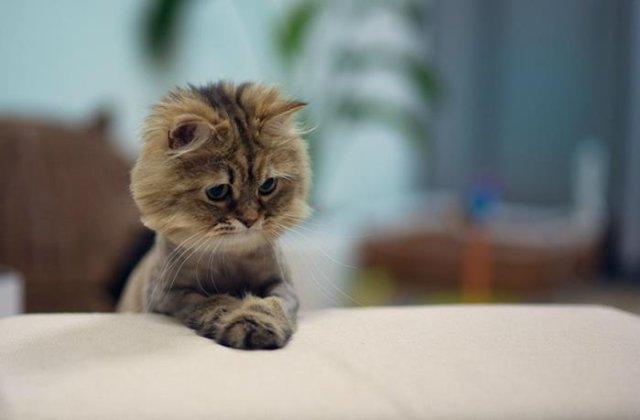 12 pisicute care vor trebui sa treaca din nou pe la frizer