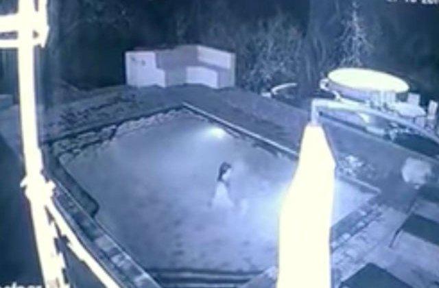 [VIDEO] Momentul terifiant in care un crocodil a atacat un cuplu in piscina hotelului