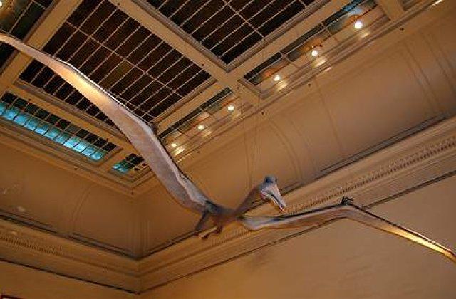 Cel mai mare Pterosaur din lume, descoperit in Romania